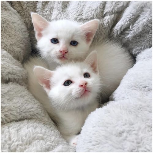 Adorable Rescue Kittens Need Homes!