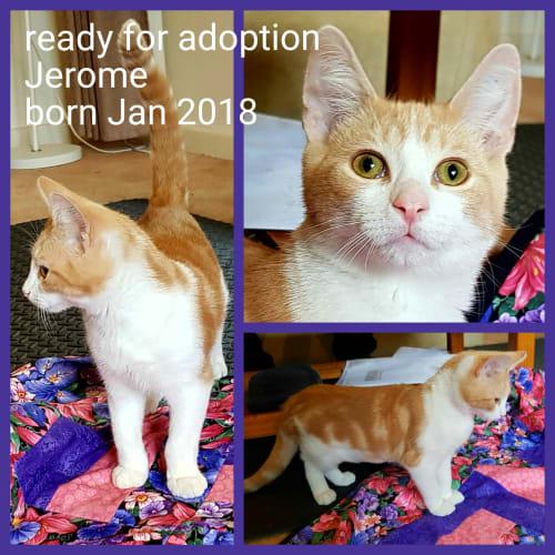 Jerome - Moggie Cat