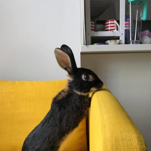 Emerald -  Rabbit