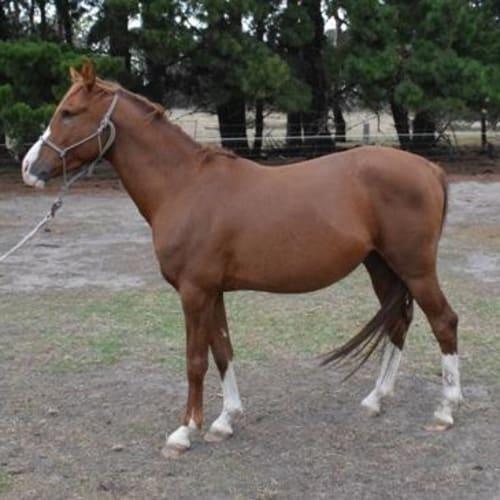 Popeye 889866 -  Horse