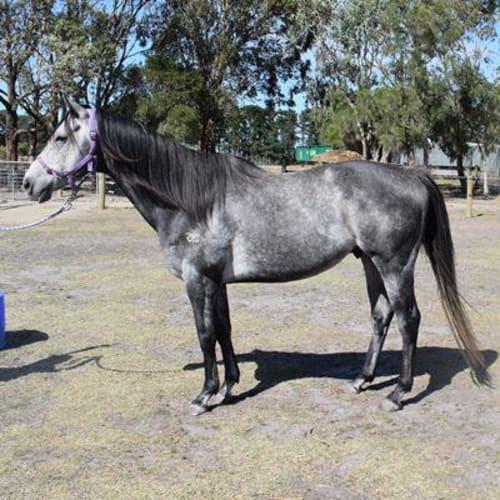 Nero 869841 -  Horse