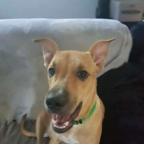 Clio - Mixed Breed Dog
