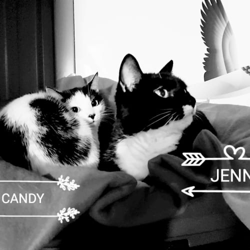 Candy & Friends - Domestic Short Hair Cat