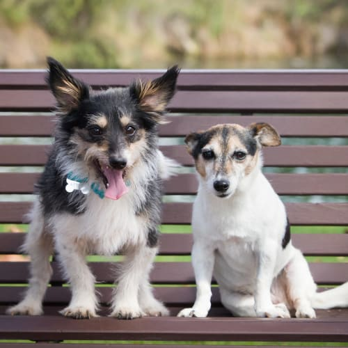 Gizmo and Holly - Terrier Dog