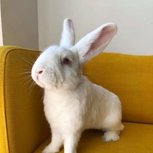 Dolomite -  Rabbit