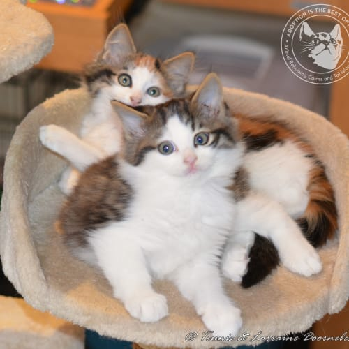 Ruby Red and Ruzenka - Domestic Long Hair Cat