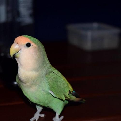 Keiko -  Bird