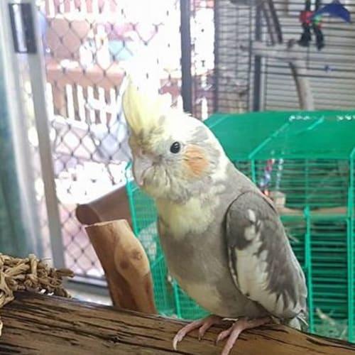 Millie -  Bird