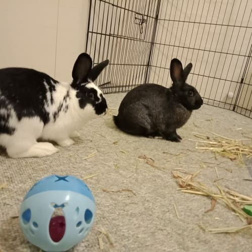 Heart -  Rabbit
