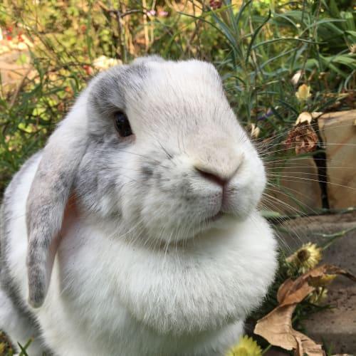 Lola  -  Rabbit