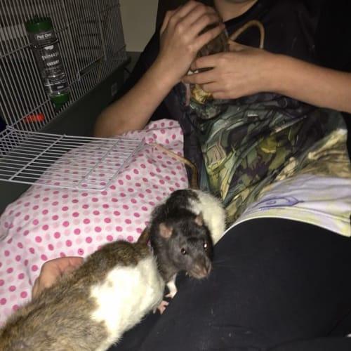 Templeton, Remington & Bandit -  Rodent