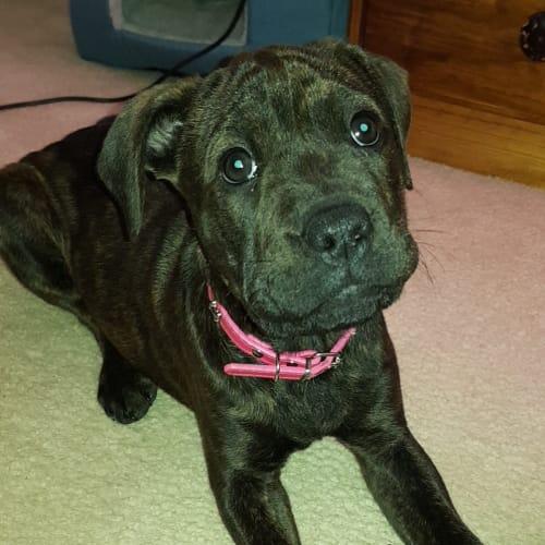 Yumi a confident puppy  - Mixed Breed Dog