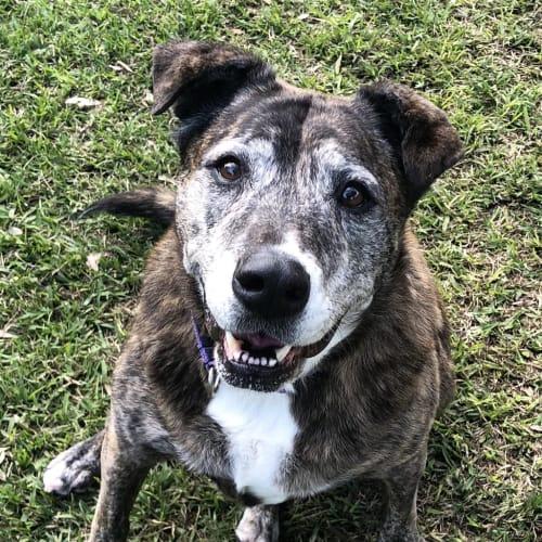 Bella - Medium Mixed Breed Dog