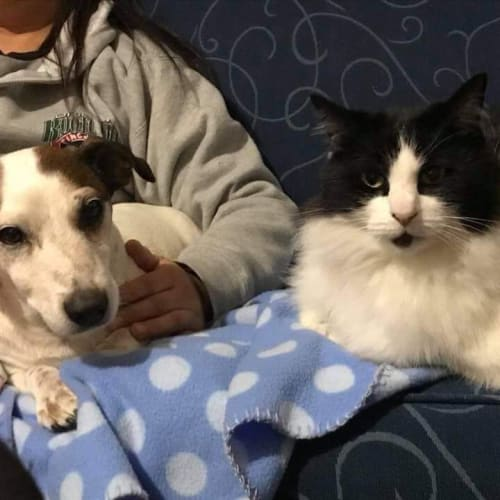 Mustang and Matilda  - Jack Russell Terrier Dog