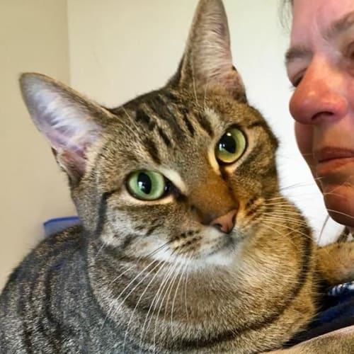 Frank and Bertie - Domestic Short Hair Cat
