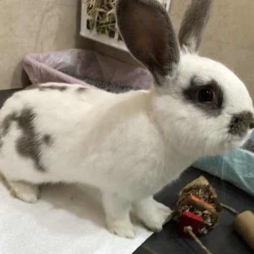 Fuji -  Rabbit