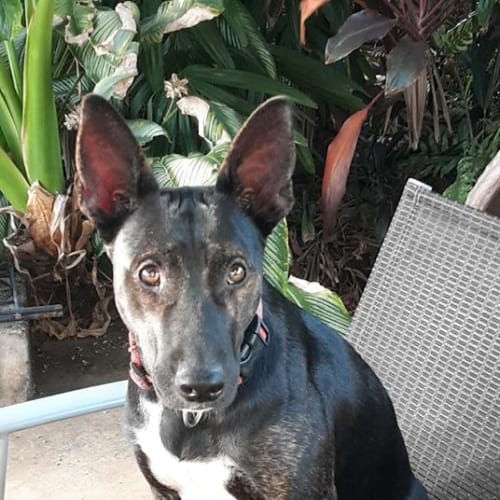 Squeak - Mixed Breed Dog