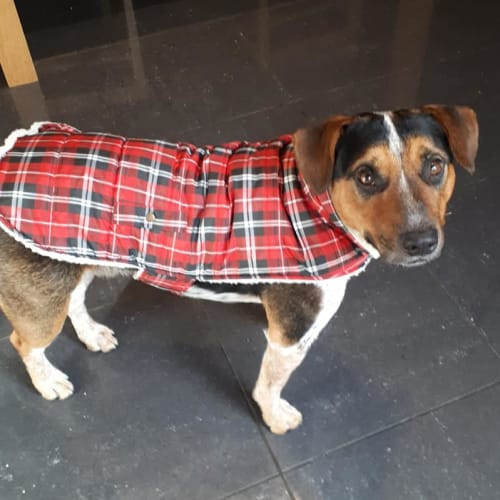 Boof - Cross breed Dog