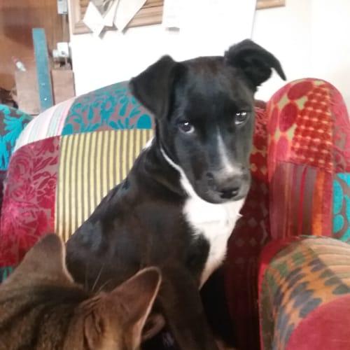 Wick - Mixed Breed Dog
