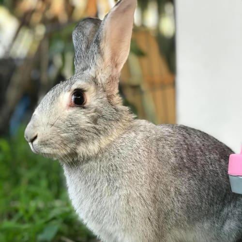 Geneva  -  Rabbit