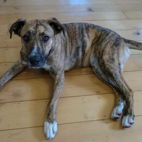 Sadie - Mixed Breed Dog