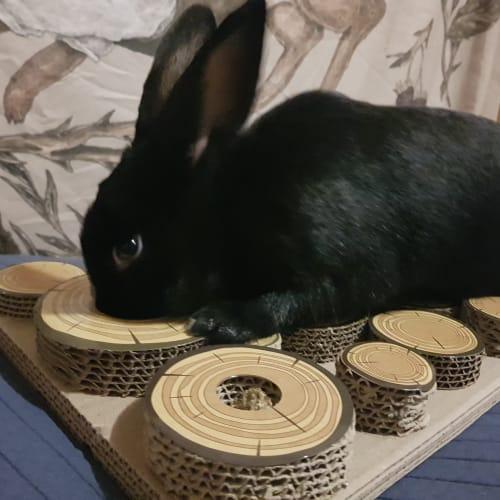Azuma -  Rabbit