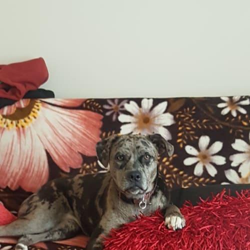 Apricot - Mixed Breed Dog
