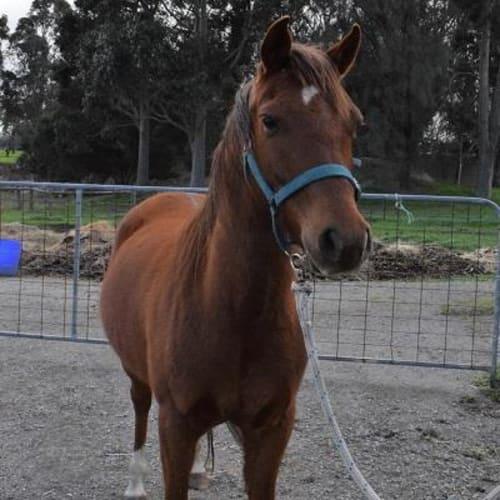 Titch 848981 -  Horse