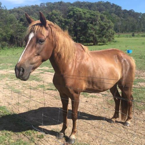 Eve - Pony Horse