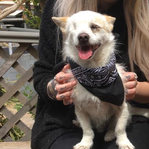 Eddie is special  - Maltese x Miniature Fox Terrier Dog