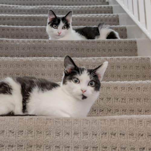 Gem and Rani - Domestic Short Hair Cat