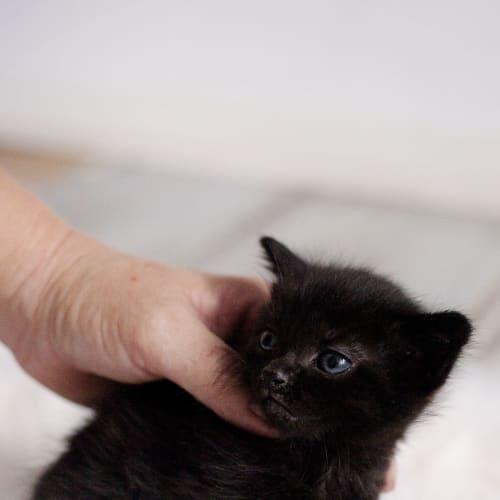 Winter - Domestic Medium Hair Cat