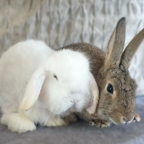 Milly & Easter - Bunny Rabbit