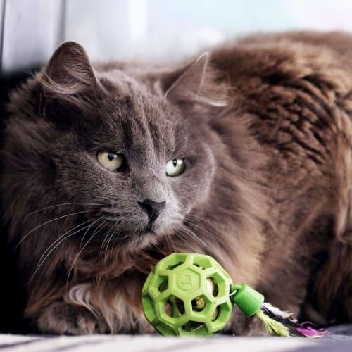 AC0861 - Sadie - Domestic Long Hair Cat