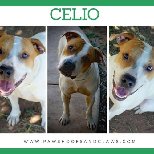 Celio - Mixed Dog