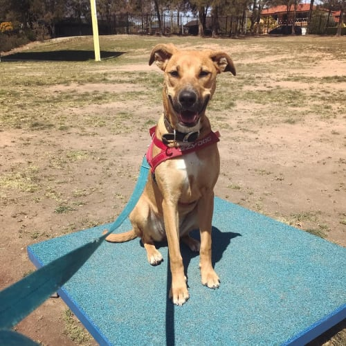 Chica! - Mixed Breed Dog