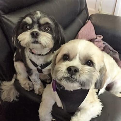 Lulu and George