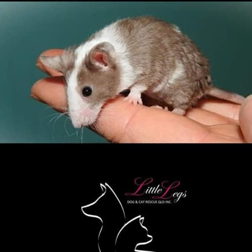 Nibbles -  Mouse