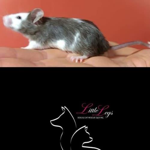 Squeak -  Mouse