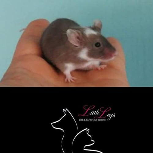 Skippy -  Mouse