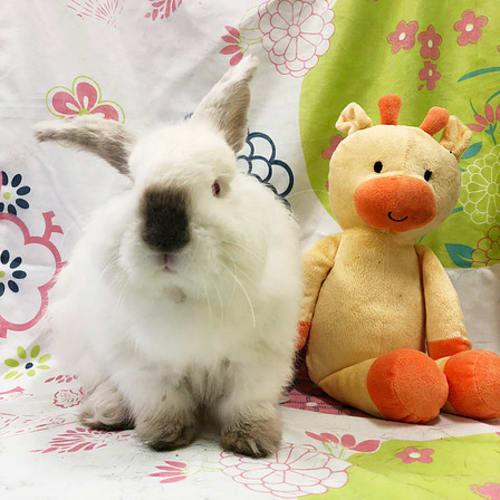 Cloud -  Rabbit