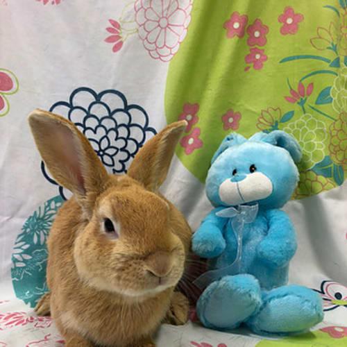 Alroy -  Rabbit