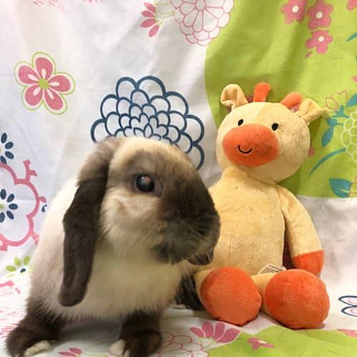 August (Vib) -  Rabbit