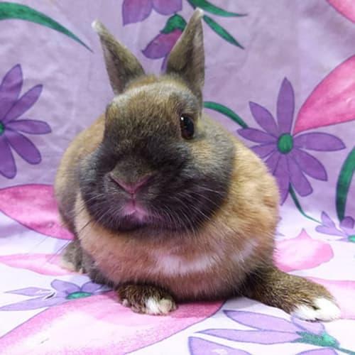 Abby -  Rabbit