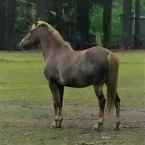 Tiny -  Horse