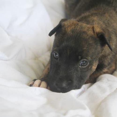 Raymond - Mixed Breed Dog