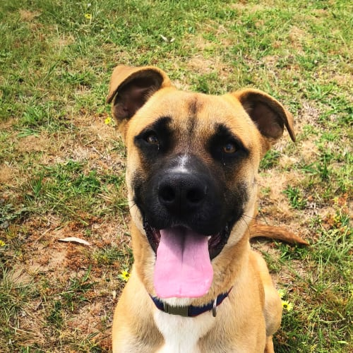 Leo - Mixed Breed Dog