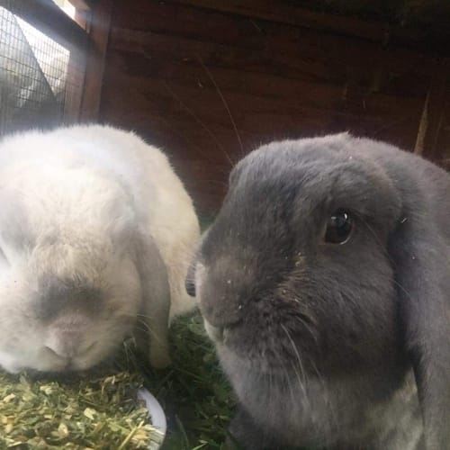 Audrey and Henry -  Rabbit