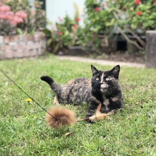 Jenny Brown - Domestic Short Hair Cat