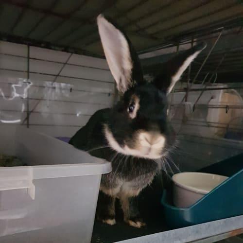 Coco -  Rabbit